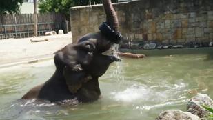 Így lubickol a vízben a Fővárosi Állatkert négytonnás elefántja