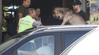 Ryan Gosling még a kutyáját is Budapestre hozta
