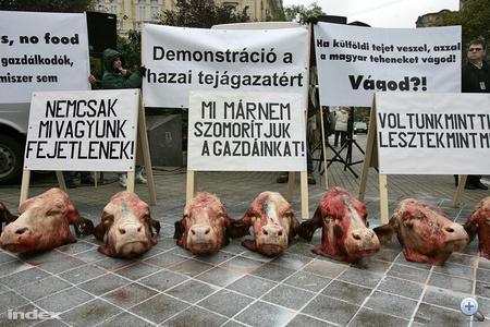 Az ország hat pontján szerveztek tüntetést a tejtermelők csütörtökön, hogy tiltakozzanak a kereskedelmi láncok alacsony felvásárlási árai ellen.