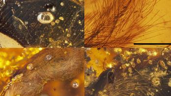 Borostyánba kövült ősmadarakat találtak