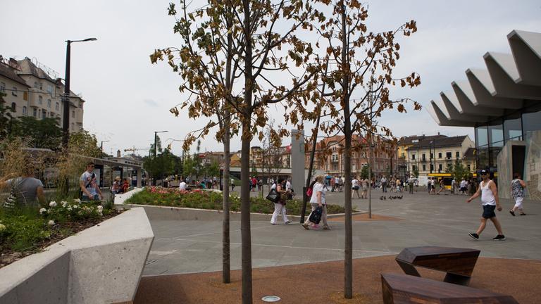 A sok víz miatt pusztulnak a fák a Széll Kálmán téren, kicserélik