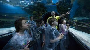 Legjobb gyerekprogram: pizsamaparti a múzeumban