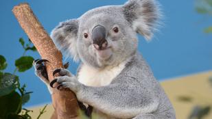 Őrült cukiság: ők az állatkert örökbefogadási sztárjai