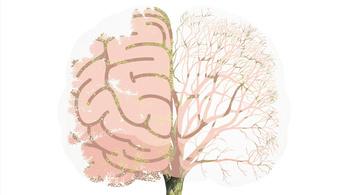 Az agy fejlődése egy fára hasonlít