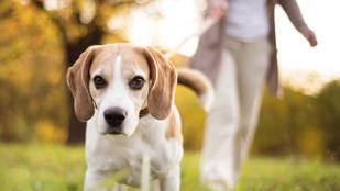 Költséges, problémás és erősen szabályozott a kutya sétáltatása és utaztatása
