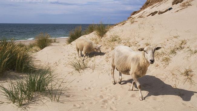 Bámulatos partok északon: főszerepben a hófehér homok és türkizkék víz