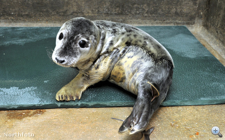 masons rescued seals 080026588