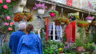Díszítse a kertet és az erkélyt virágzuhataggal!!
