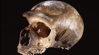 Ugyanúgy fejlődött a neandervölgyiek agya, mint a modern emberé