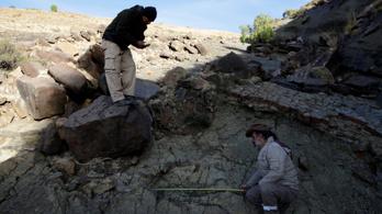 Óriási dinoszaurusz-lábnyomot találtak Bolíviában