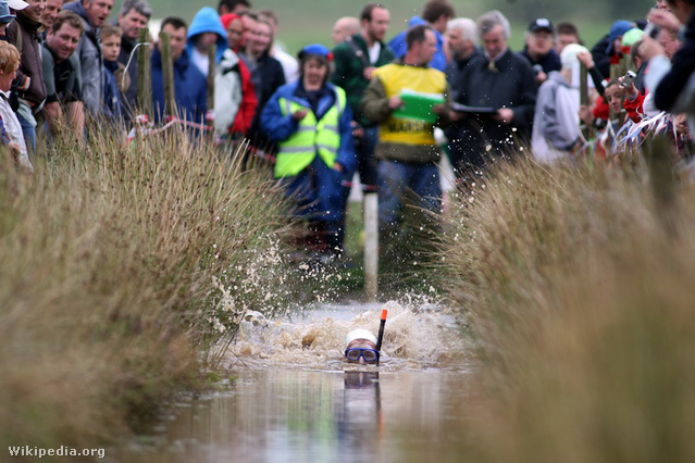 Llanwrtyd Wellsben tartják a mocsárbúvár bulit