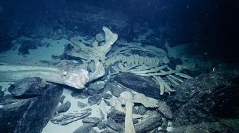 Ritka bálnatemetőt találtak