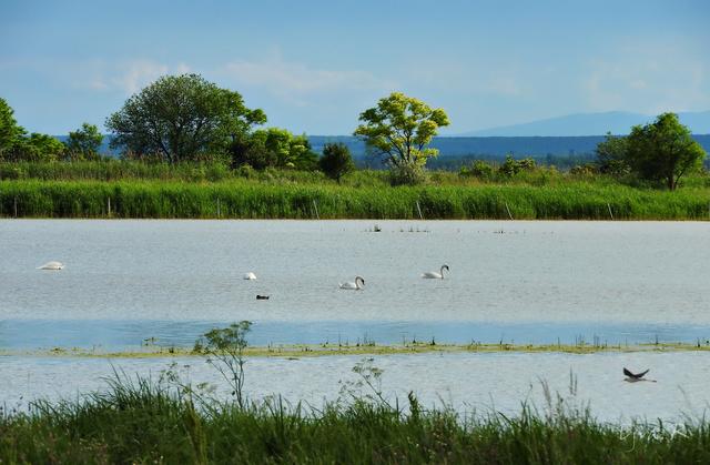 A Fertő tó és gazdag élővilága