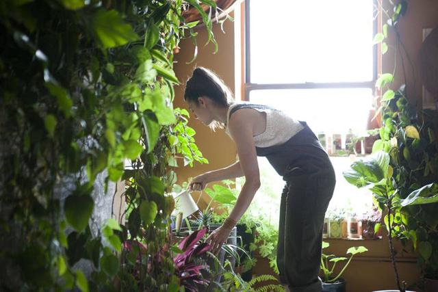 Rendszeres törődést igényelnek a növények.