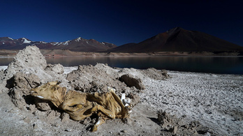 Tehénmúmia őrzi az Atacama-fennsík legszebb tavát