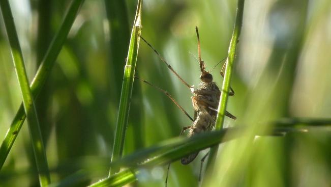 Szúnyoginvázió biztosan nem lesz hétvégén a Balatonnál