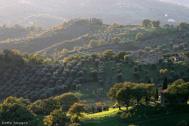 Olíva Toscanában