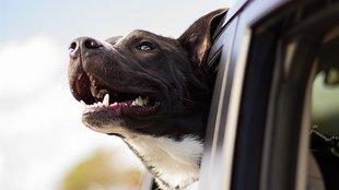 Mit tanulhatsz az időről, ha kutyád van?