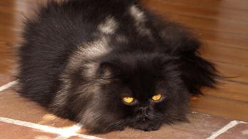 A macska a leggyilkosabb ragadozó