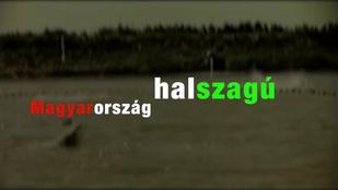 Tessék, Magyarország tényleg halszagú!