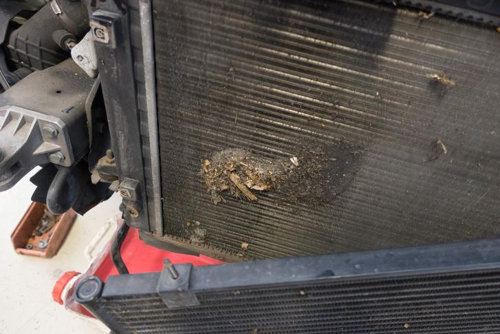 Szerelő Zoli üzeni: sokan azzal nyírják ki az autójuk motorját, hogy soha nem tisztíttatják ki a motorhűtő radiátort