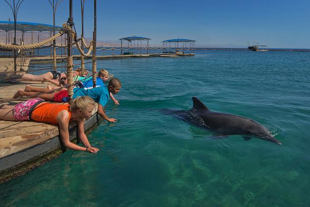 A delfin-zátony, delfinsimogatás.