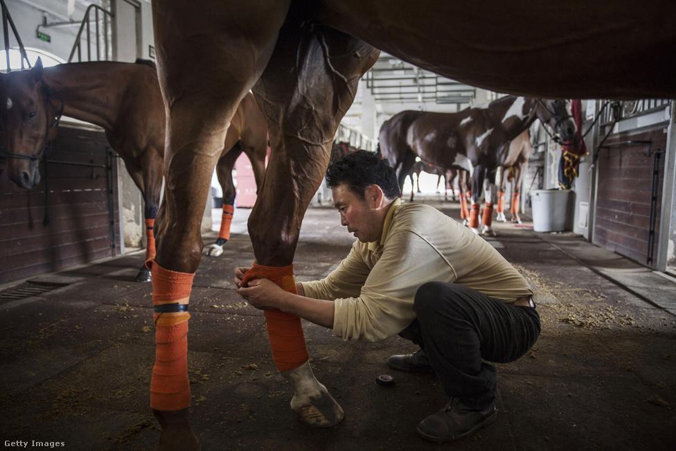 A Goldin Metropolitanban a személyzet is óriási. Hatvan lovászuk, három állatorvosok, öt patkolókovácsuk van, és tucatnyi argentin oktatójuk. A sportágban ők számítanak a legjobbaknak.