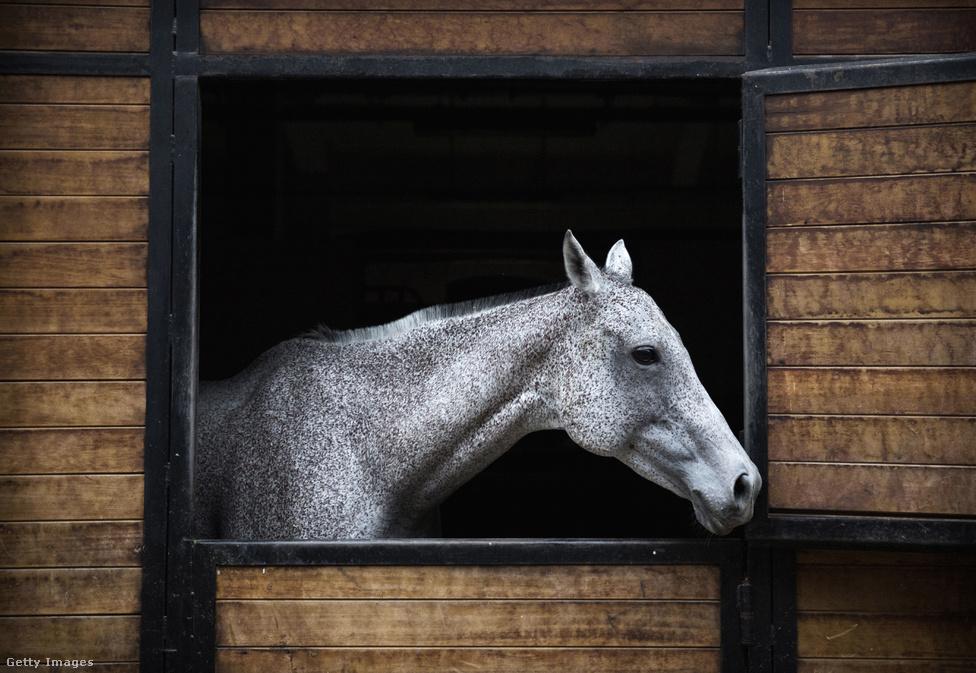 Kínában szeretnek mindent nagyban csinálni. A póló bumm 2014-ben jött el, amikor több mint négyezer lovat importáltak, hogy azokon képezzék a játékosokat.