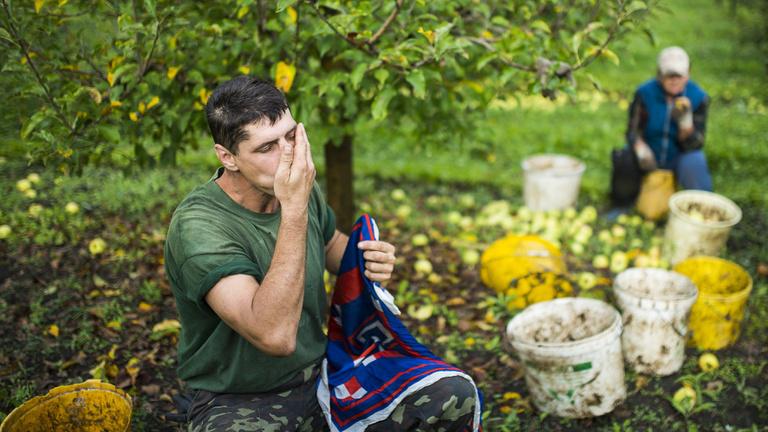 Fán rohad a magyar gyümölcs