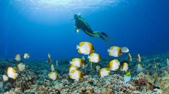 Obama egy tollvonással létrehozta a világ legnagyobb tengeri rezervátumát