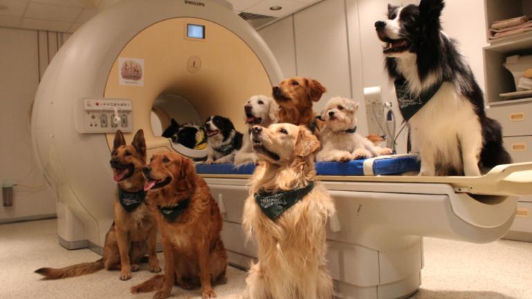 A kutyák értik, mit mondunk nekik és hogyan