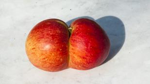 A csúnya gyümölcs is lehet egészséges, sőt!
