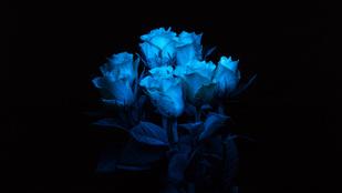 Menő vagy ciki a világító virág?