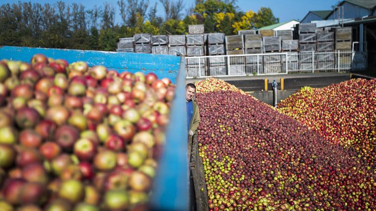 Csiga, alma, gyapjú: a külügy virágoztatja fel a magyar gazdaságot