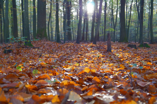 Az őszi erdő kiváló terep kezdő túrázóknak