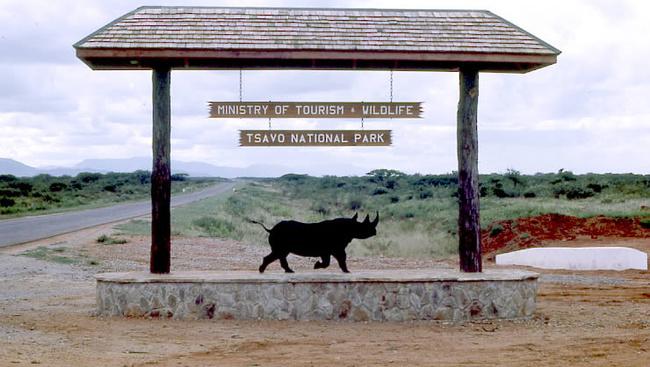 Elefánt ölt meg egy olasz turistát Kenyában