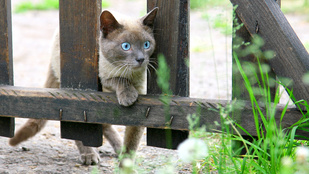 Meglepő tények és gyakori tévhitek a macskákról