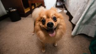 Van, aki a kutyáját, van, aki a golyóálló mellényét felejti a hotelszobában távozáskor