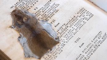 Látott már latinkönyvbe préselt egeret? Itt az alkalom.