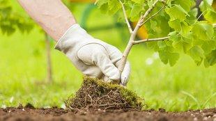 Az ősz a gyümölcsfa ültetés ideje