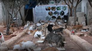 Ezt a férfit a szíriai háborúból csak a macskák élete érdekli