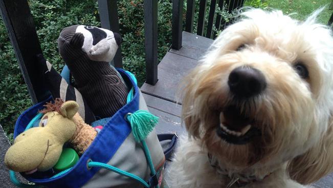 Cukiság a családnak: kutyaszépségverseny és cicasimogató az állatotthon nyílt napján