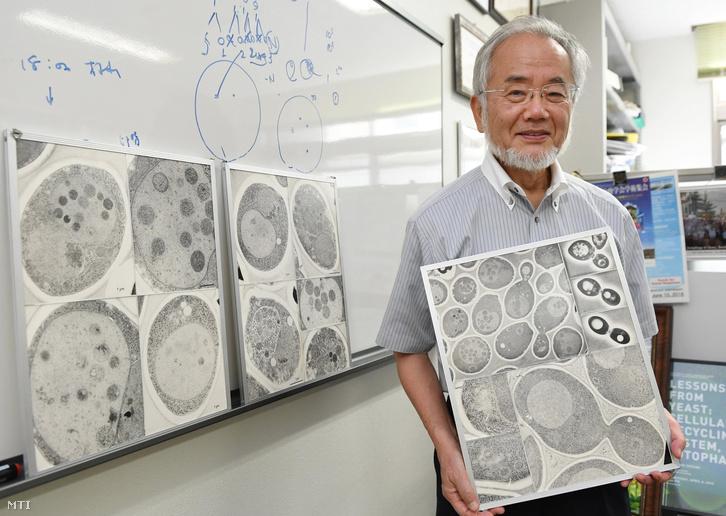2016 júliusában Jokohamában készített kép Ohszumi Josinori japán tudósról, aki 2016. október 3-án elnyerte az orvosi Nobel-díjat.