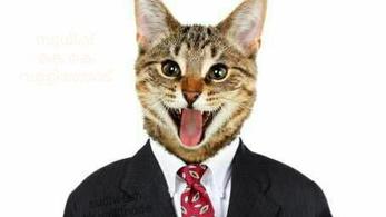 Egy macskás kép miatt törölték Facebook-fiókját