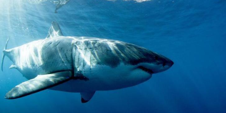 shark-week-2016-megalodon