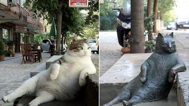 Szobrot állítottak Isztambul leglustább macskájának