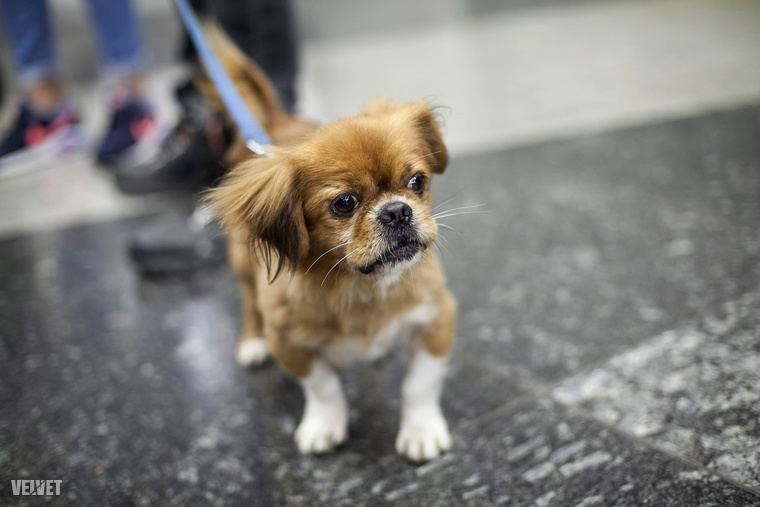 Fogadja örökbe Mandarint, vagy bármely más menhelyi kutyát! Jó lesz! Ha pedig már van kutyája, akkor közlekedjen vele biztonságosan, köszönjük a figyelmet!