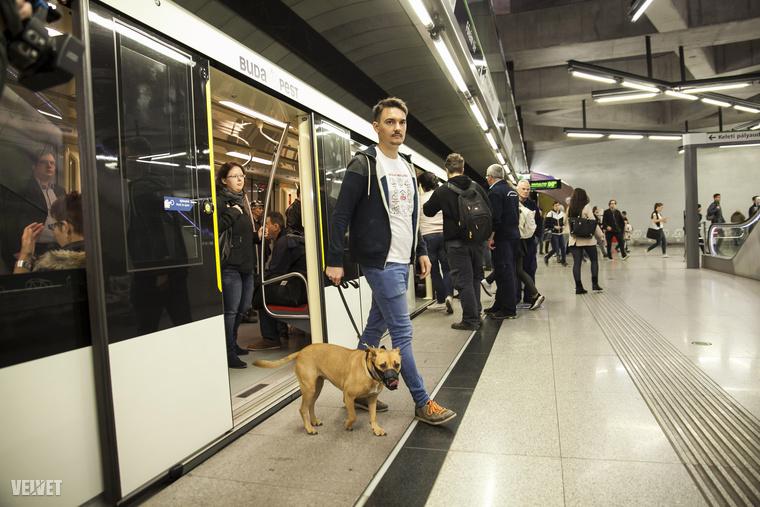 Arra is figyelni kell, nehogy az automata ajtók odacsípjék a kutya farkát