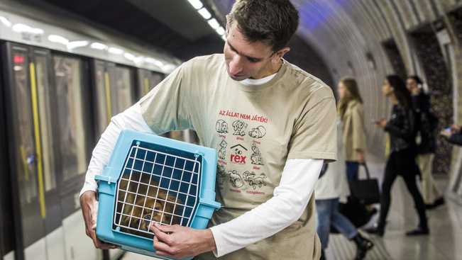 Ingyen metróznak a dobozban utazó kutyák