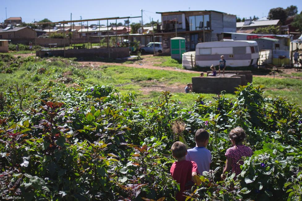 Dél-Afrikában az apartheid kilencvenes évek eleji összeomlása után a lakosság 10 százalékát kitevő fehér lakosság elveszítette ugyan a törvények által garantált kiválasztottságát, az 1994-es választások után pedig a politikai vezetést is, de gazdasági-társadalmi mutatókban messze felülmúlták az ország fekete, délkelet-ázsiai és keveret rasszú lakosait. Fehérnek lenni a közvélemény szemében is egyet jelentett a jóléttel. Pedig az apartheid káros hatásait kompenzáló pozitív diszkriminációs intézkedések és a 2008-as válság miatt az állami szférából és a magángazdaságból is egyre több fehér munkás került az utcákra.